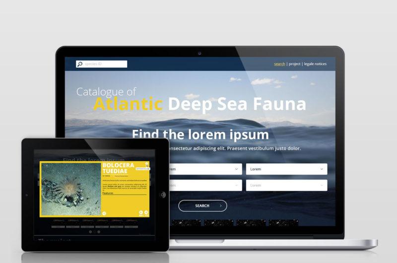 Ifremer ONC Catalogue of atlantic deep sea fauna Nicolas Roullet Brest Julie Tourolle